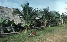Kalimantan culture